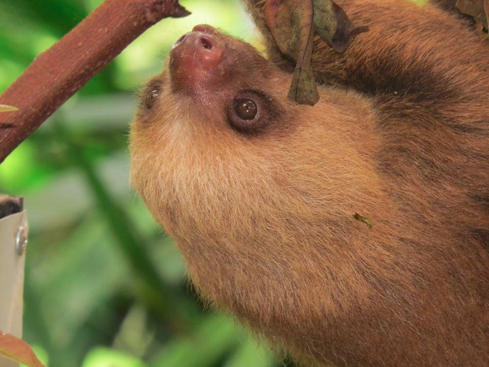 Estudio hecho en Costa Rica permite desvelar uno de los secretos de ...