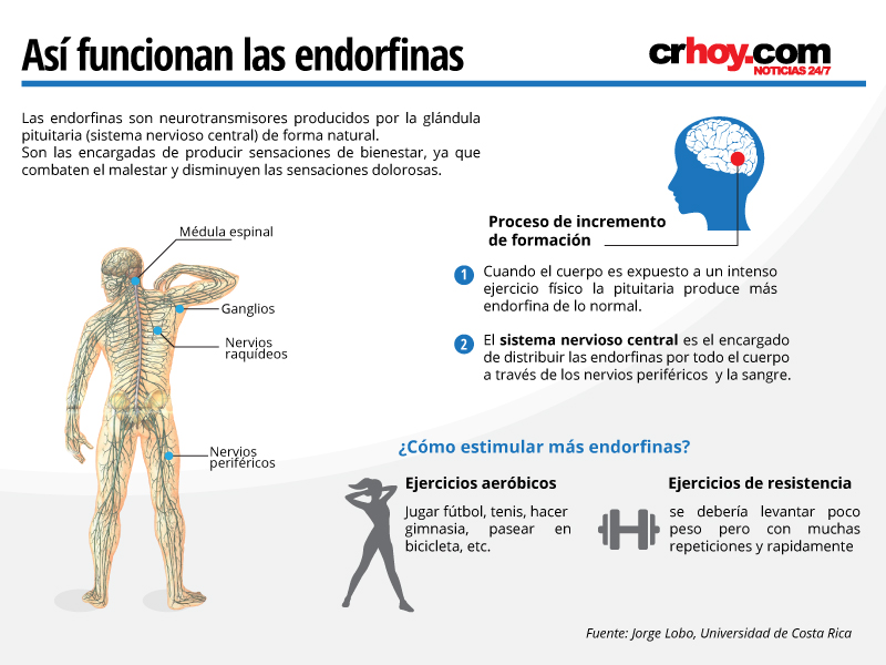 El ejercicio libera más de 50 hormonas en el cuerpo y ayuda a ser ...